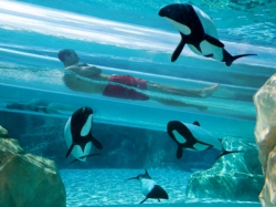 Florida Resident Discount at Aquatica by SeaWorld